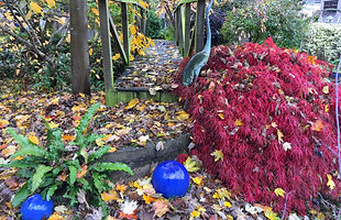 November garden.jpg