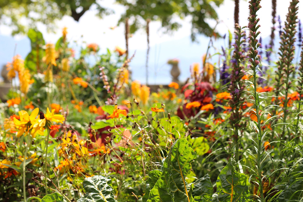Diverse colourful municipal flower borders at Annecy. Photo: Debi Holland