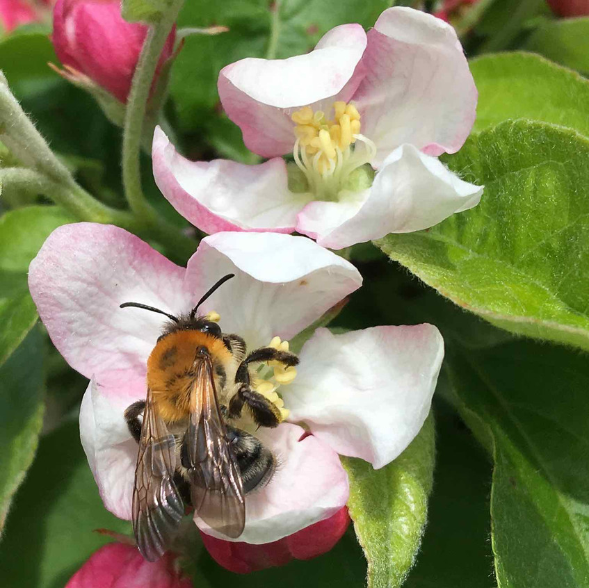 Bee happily feasting