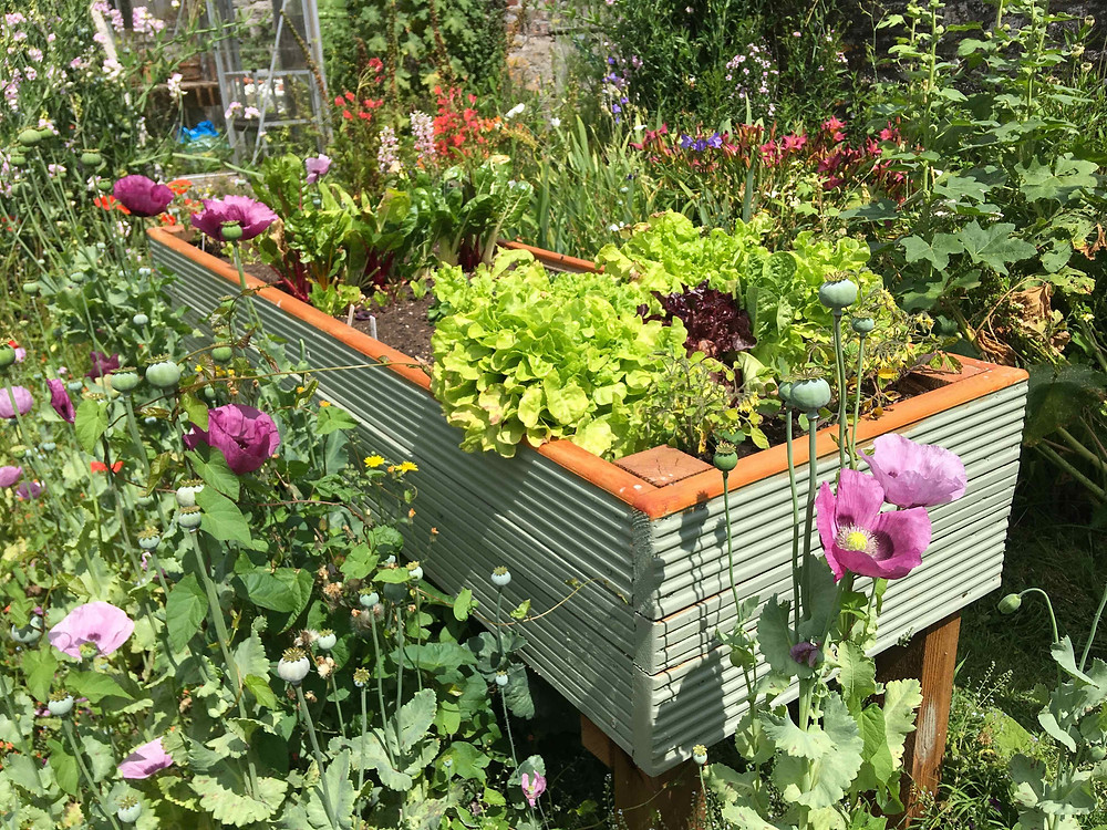 Raised bed are ideal for working at waist height