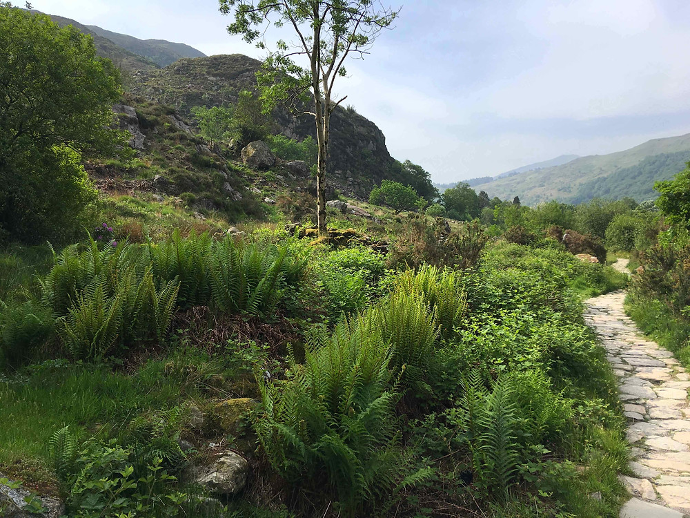 The fern-lined path to Beddgelert