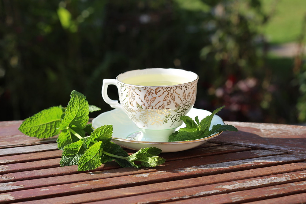 Mint tea cup in the garden