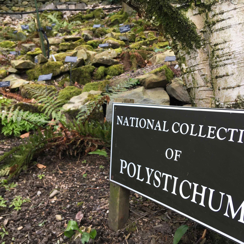 National Collection of Polystichum