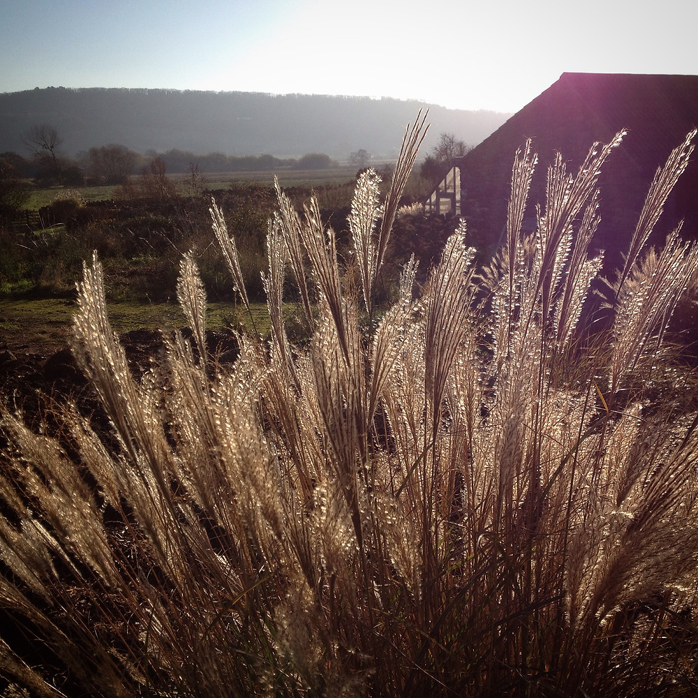 Cut grasses back ready for new growth