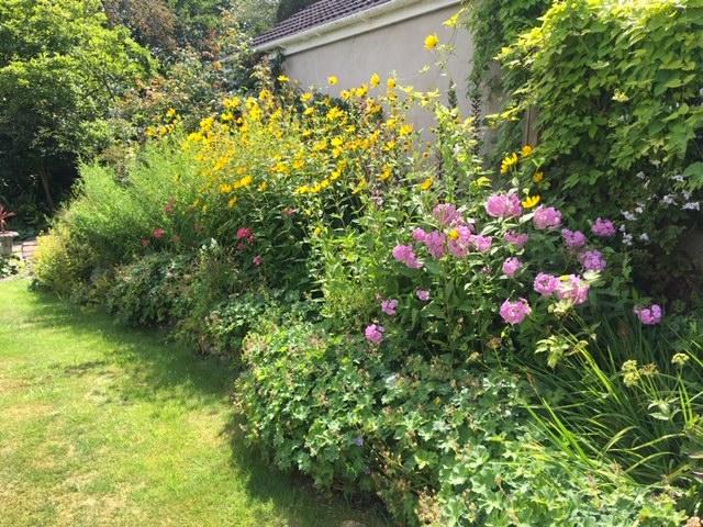 Big herbaceous border in bloom