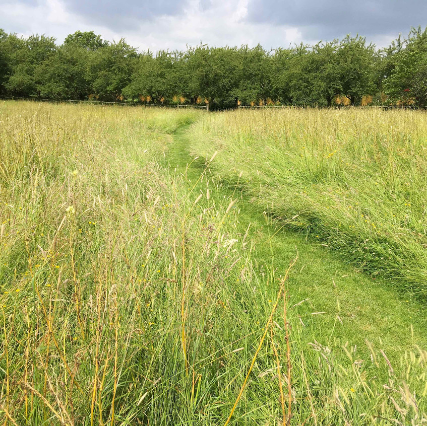 Path mown through meadow