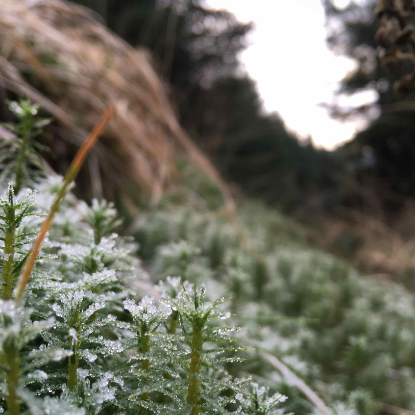 Frost foliage on forest bike ride