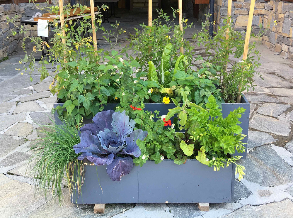 Grow edibles in containers