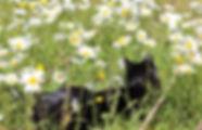 Fred enjoying the wild lawn.jpeg