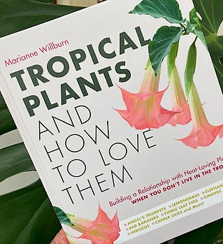 Marianne Willburn Tropical Plants.jpg