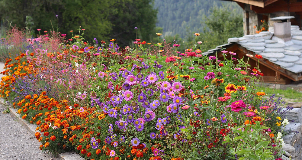 Annuals are great gap fillers in borders