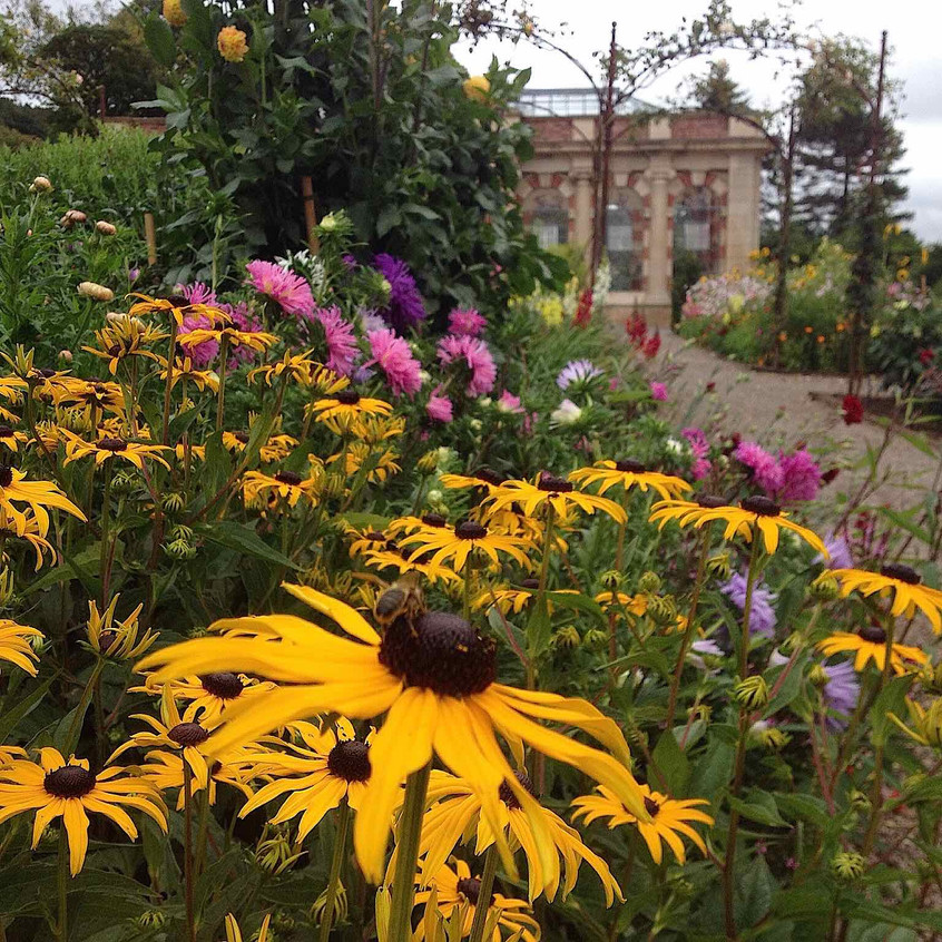 Flower beds bloom. Photo: DH