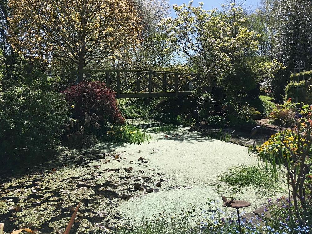 Pond weed pool