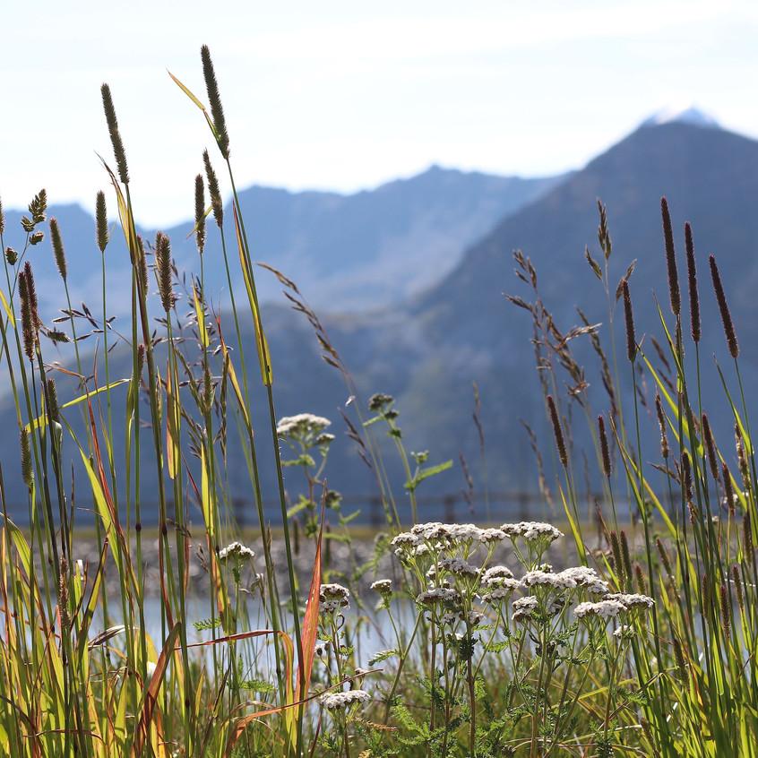 Grasses & Achillea millefolium