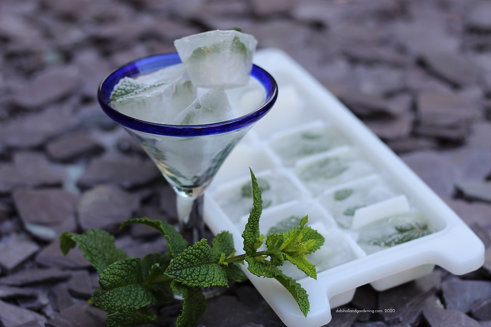 Make your own edible herb or flower ice cubes