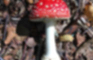 Fly agaric.jpeg