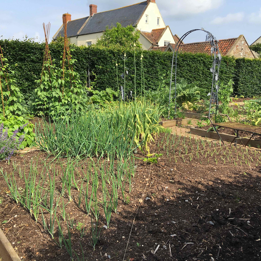 Crops in the kitchen garden