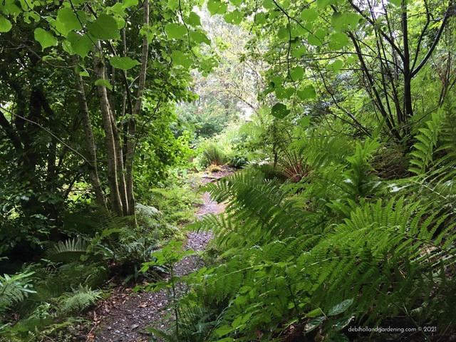 Wilderness tamed. Ferns & paths saved from smothering weeds