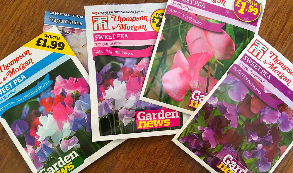 Not too late to sow sweetpea seeds for Spring