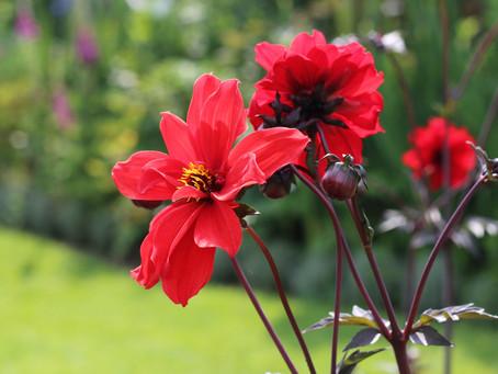 July - Gardening Jobs