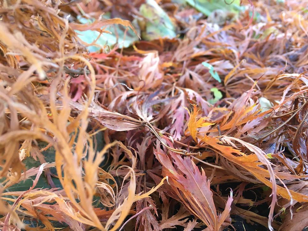Leaves glorious leaves