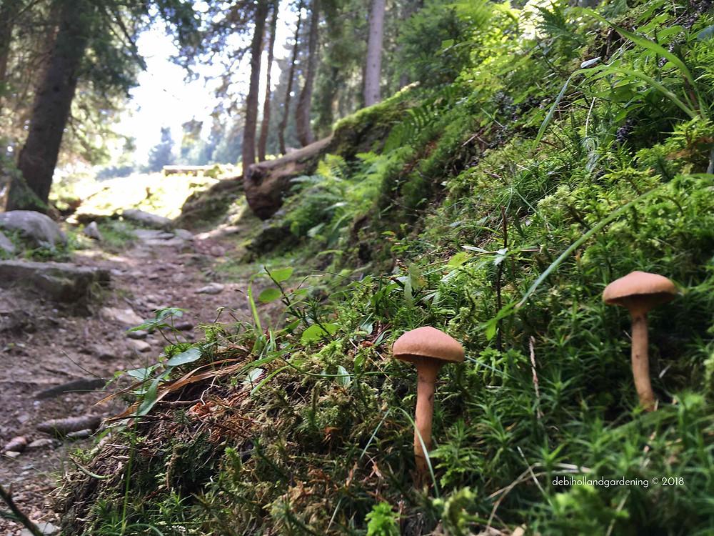 Alpine fungi