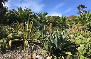 Agaves, palms and prickly pears.jpeg