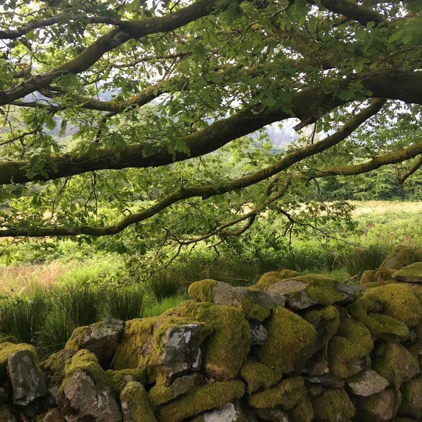 Moss covered dry stone wall