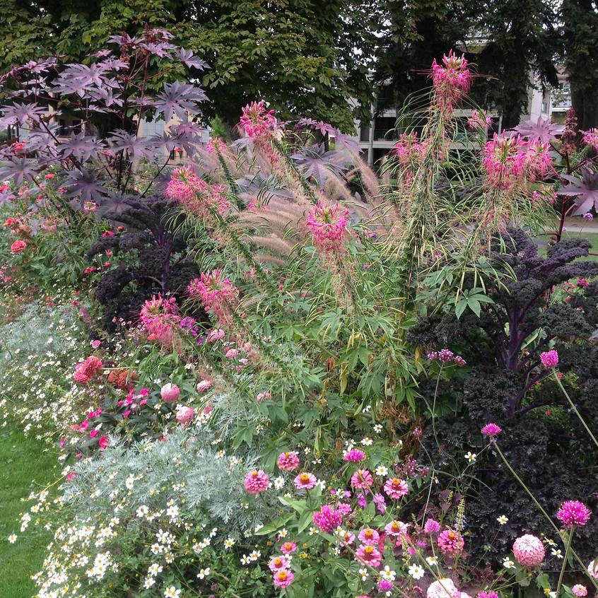 2016 Biodiversity floral display
