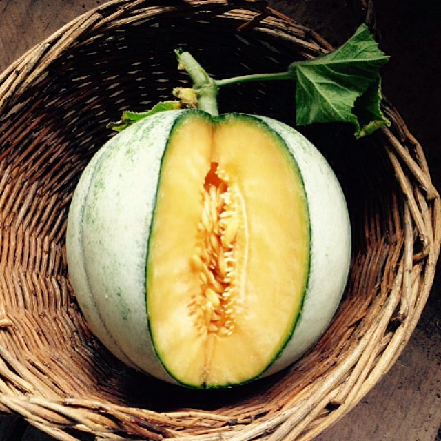 Exotic delights of melon