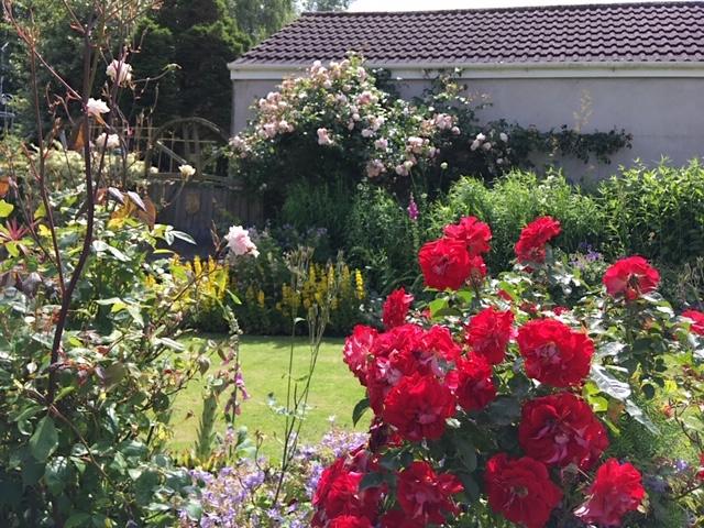 Impressive rose collection