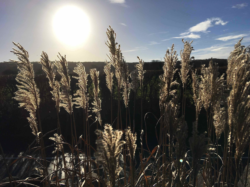 Leave grasses & seed heads for winter interest & wildlife habitat