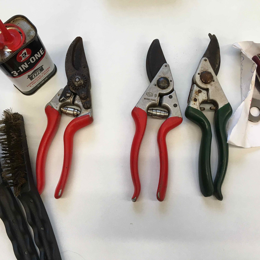 Clean & repair old secateurs