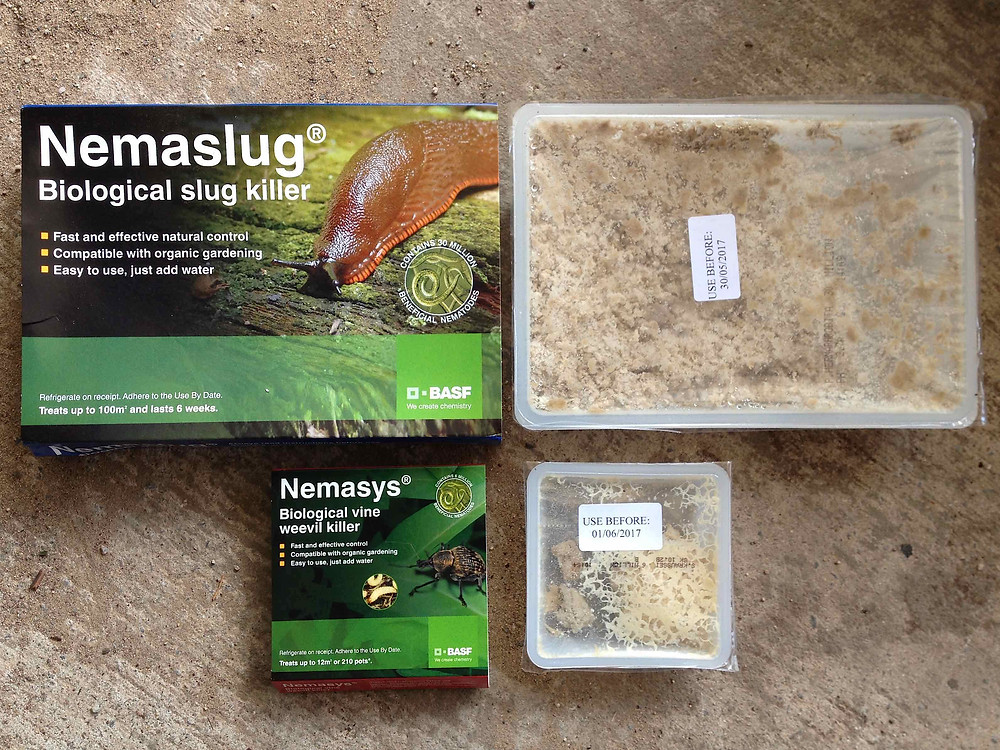 Nematodes - biological control for slugs & vine weevil