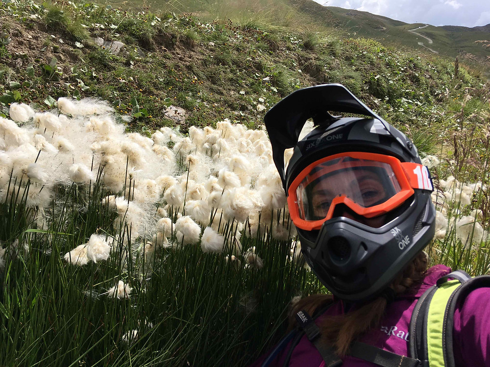 Finding Cotton Grass in the French Alps by mountain bike