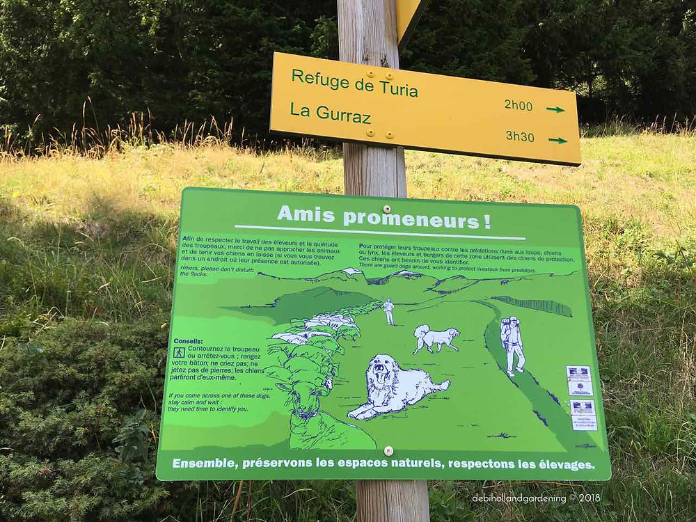 Beware of wild dogs whilst walking in the alps