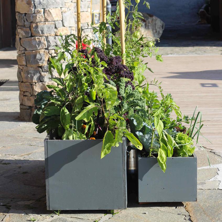 Salad planters