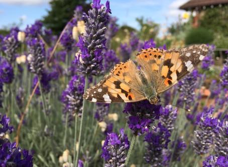 Create a Wildlife Garden