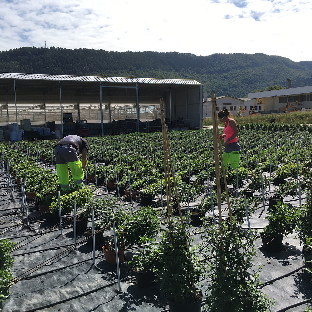 Hard at work at the new Horticulture Centre. Photo c/o Christophe FERLIN