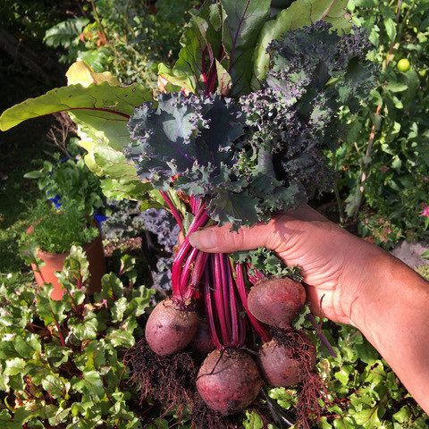Homegrown beetroot and kale