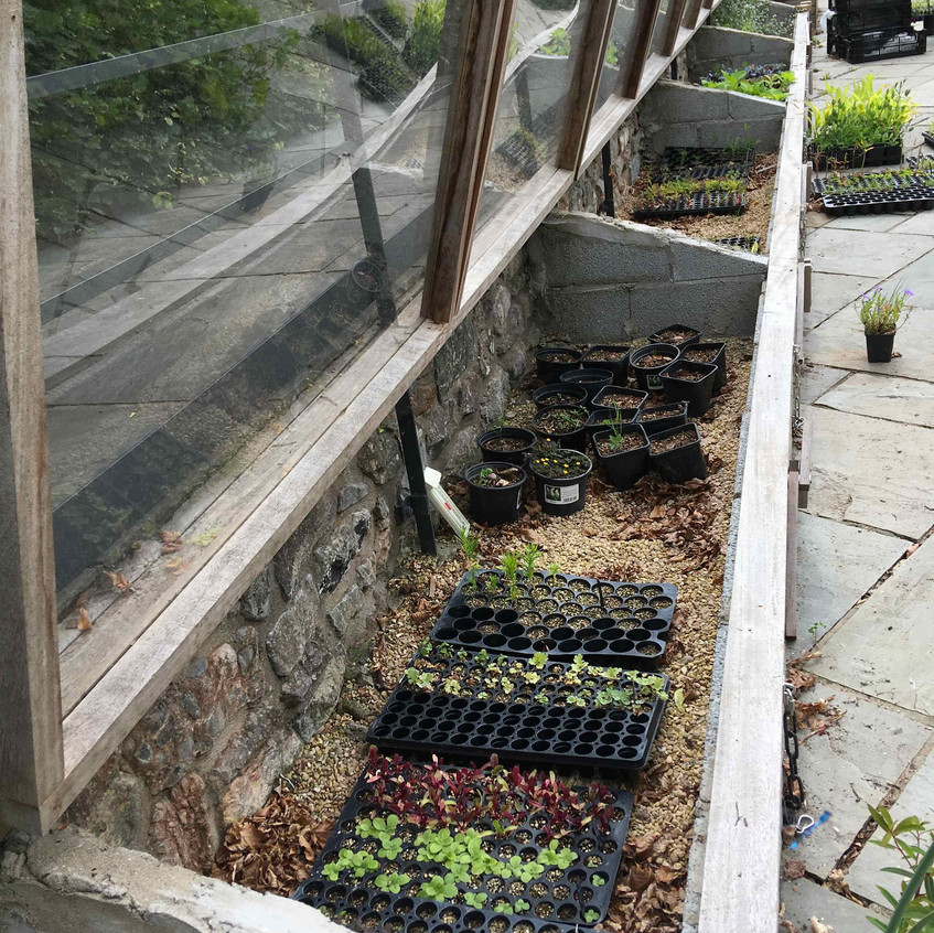 Bringing on seedlings in cold frames