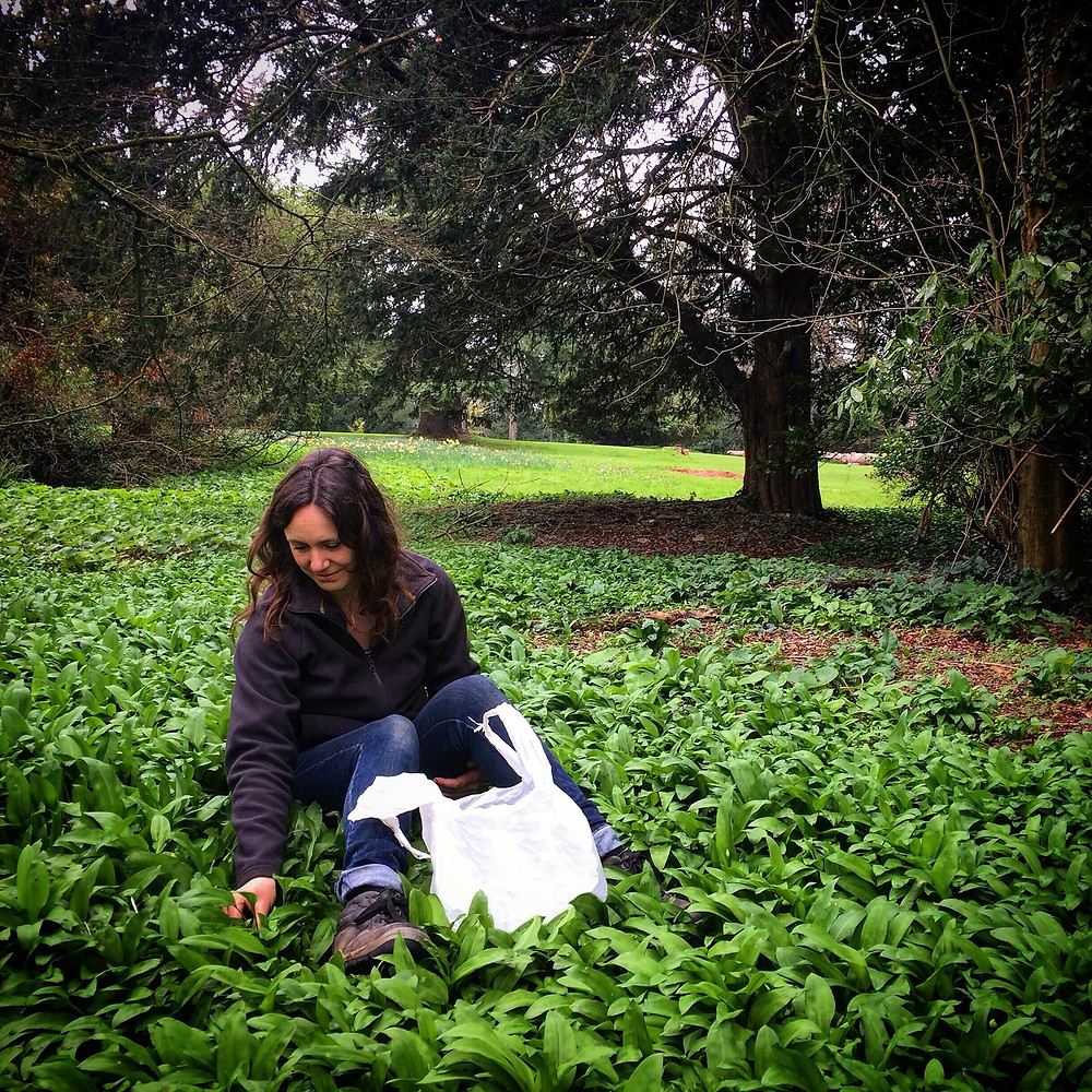 Lucy harvesting wild garlic on the Tyntesfield estate. Photo: Lucy Clements