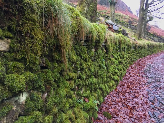 Moss-covered dry stone wall
