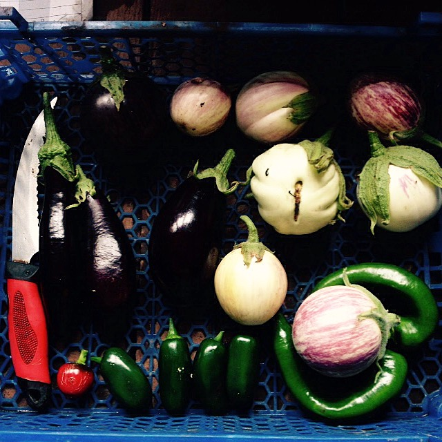 Collection of egg plants