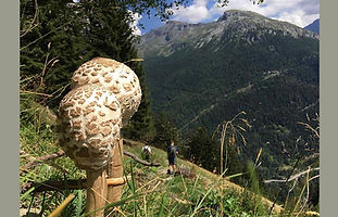 Finding Fungi, Macrolepiota procera.jpg