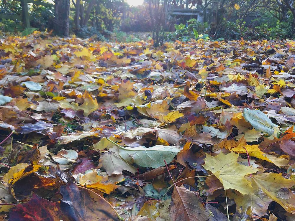 Leaf litter - bag it up to make leaf mould