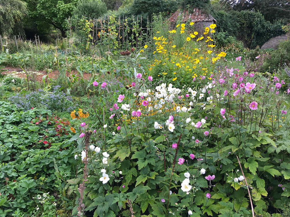 Perfect combination in a kitchen garden - flowers and vegetables