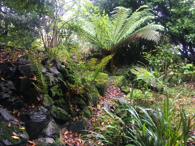 Tree fern over looks original, now dry, pond