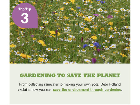 Richard Jackson Garden Gardening to Save the Planet