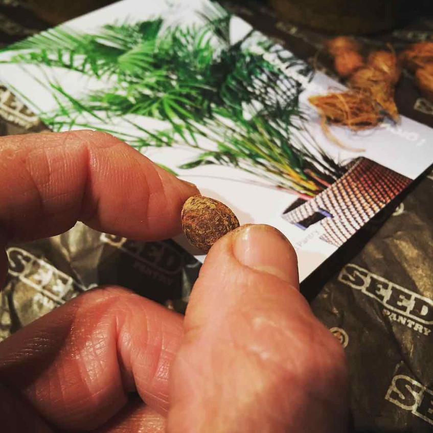 Seed Pantry seed sowing
